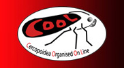 COOL: Cercopoidea Organised On Line