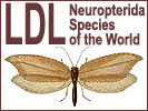 LDL Neuropterida
