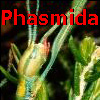PhasmidaSF: PhasmidaSF: Phasmida Species File
