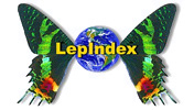 LepIndex: LepIndex: The Global Lepidoptera Names Index