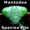 MantodeaSF: MantodeaSF: Mantodea Species File