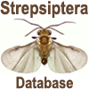 Strepsiptera Database: Strepsiptera Database: Global Strepsiptera Database